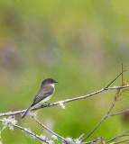 Lake City Wetlands birds-2.jpg
