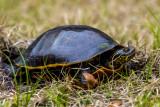 Chicken Turtle Alligator Lake-2.jpg
