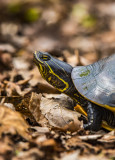 Chicken Turtle Alligator Lake-3.jpg