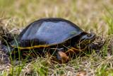 Chicken Turtle Alligator Lake-4.jpg