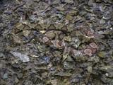 Copperheads x2.jpg