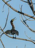 Lake City Wetlands Birders-6.jpg