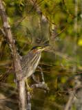Lake City Wetlands Birders-8.jpg