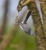 Lake City Wetlands birds-3.jpg