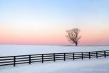 Winters Blush