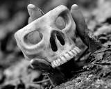 Antler skull ring #2