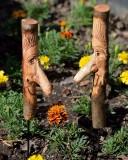 Maple man garden sticks