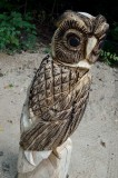 Owl #3- burning in carved feathers