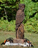 Owl #3 complete