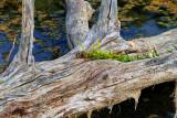 Woodland Scenes