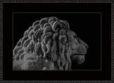 378 = En nasjonal løve V3 = 529A4439.jpg