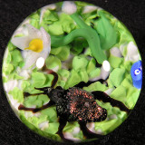 Jewel Beetle  Size: 1.22  Price: SOLD