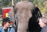 Circus 1994