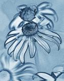 Floral Abstracts Portfolio