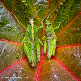 Two Friends on a Leaf