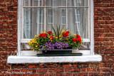 Gorgeous Window Flower Box