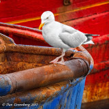 A Brief Rest on a Rusty Boat