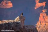 Condor's Perch