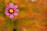 Fall's Last Bloom