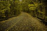 November Stroll