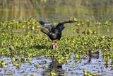 Aerial Water Birds