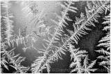 Early season fractal ice.