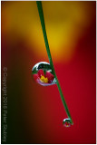 The incredible, amazing water droplet