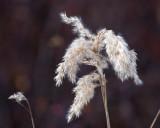 Just Weeds...