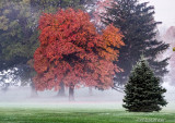 Fall Tree In The Fog 1190709