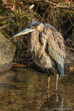 GBH In Stream At Saratoga Spa State Park
