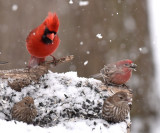Snowy Day at the Bird Feeders