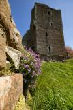 Brougham Castle IMG_8941.jpg