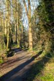 Dene Wood IMG_9237.jpg