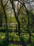 Dene Wood IMG_1124.jpg