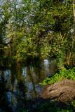 Dene Wood IMG_1144.jpg