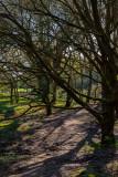 Beverley Westwood IMG_1331.jpg