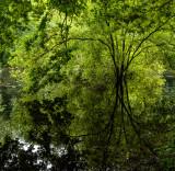 Dene Wood, Cottingham IMG_3303.jpg