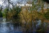 Dene_Wood_IMG_1153.jpg