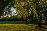 Hornbeam Drive, Cottingham IMG_5658.jpg