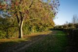 Snuff Mill Lane, Cottingham IMG_5616.jpg