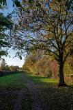 Snuff Mill Lane, Cottingham IMG_5642.jpg