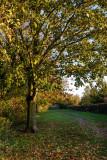Snuff Mill Lane, Cottingham IMG_5647.jpg