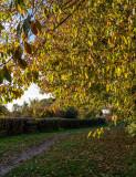 Snuff Mill Lane, Cottingham IMG_5649.jpg