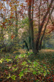 Dene Wood IMG_6124.jpg