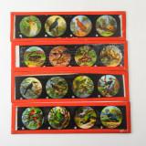 03 Box of 14 Magic Lantern Colour Slides - Animals, Snakes.jpg