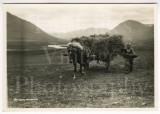 001 Nr. Akureyri Icelandic Boy with Horse & Hay Cart.jpg