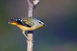 Favourite Bird Photos
