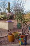 Tucson Cactus Design