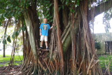 July 2016 - Kyler in a somewhat large Banyan tree in a tot lot park in Miami Lakes