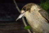 Birds in my backyard